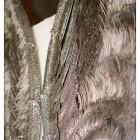Angel-Wings-Detail-2